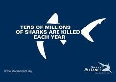 Stop shark finning. It's real, and its taking its toll on the ocean.