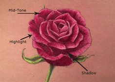 Color Pencil Drawing Tutorial The Virtual Instructor: Drawing lessons. Draw a rose - highlights and shadows Drawing Lessons, Drawing Techniques, Drawing Tips, Sketching Tips, Drawing Ideas, Shading Drawing, Plant Drawing, Cool Drawings, Pencil Drawings