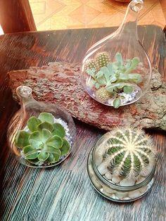 Cactus Y Suculentas, Terrariums, Terrarium, Terraria