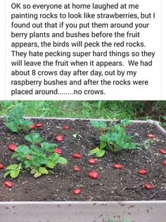 Vegetable Garden, Garden Plants, Berry Plants, Useful Life Hacks, Dream Garden, Things To Know, Farm Life, Garden Projects, Good To Know
