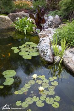 What You Need To Know About Pond Filtration