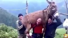 http://dai.ly/x1wrw8b/162732 #Funny Videos - #Fail #Compilation