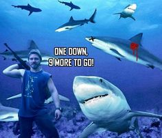 right-now-03:  For everyone disappointed by Discovery channel bumping ABP for Shark Week!! My guess is that DC is just teasing us by making us wait!! Found this on the Bam Bam FB fan page.  Ha ha! This is awesome