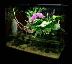 Paludarium by http://www.aquascape-boutique.fr