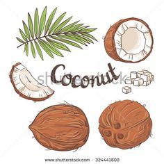 Coconut set - the whole nut, leaves, a coco segment and pulp of a coco. Vector illustration.