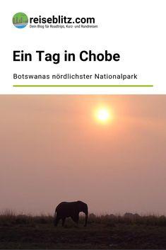 Botswana - ein Land über das wir vor unserer Reise fast nichts wussten. Umso schöner, während einem tollen Tag im Chobe-Nationalpark mehr zu erfahren. Travel, Round Trip, Travel Report, National Forest, Africa, Viajes, Destinations, Traveling, Trips