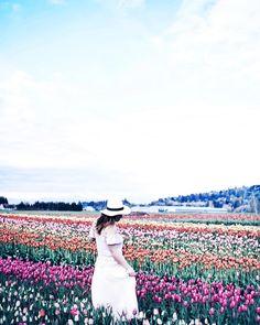 Tulip fields forever  #tulipfestival #springishere #tulips : @aliciafashionista