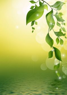 Background With Green Leaves Free Stock Photo - Public Domain Pictures Flower Background Wallpaper, Flower Backgrounds, Cool Wallpaper, Background Images, Wallpaper Backgrounds, Frame Border Design, Page Borders Design, Creation Image, Landscape Wallpaper