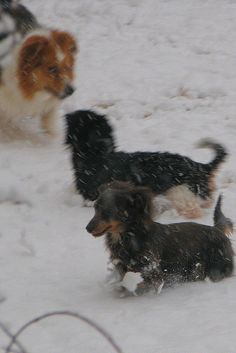 Macey, Dooney, Penny in Snow Play