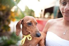 Dachshund and bride... should we incorporate Hurbie into the wedding? Too bad he's still a crazy puppy.