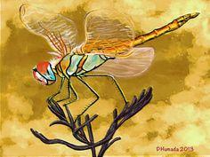 Galería de una afición. : Dragonfly