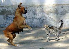 Chien ou chat? Ce que Félix et Médor disent de votre personnalité