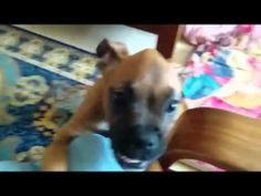 Pet and Animal Vines Compilation, 2014 funny animals talking, funn - http://dailyfunnypets.com/videos/cats/pet-and-animal-vines-compilation-2014-funny-animals-talking-funn/ - Please Subscribe Pet and Animal Vines Compilation, 2014 funny animals talking, funn [ ] Funny Animals Compilation 2014 new animal clips hope you enjoy Now on... - (animal), (fictional, (film), animals, best, cat, cats, character), clips, cute, dog, dogs, friend, funny, moments, pets, video