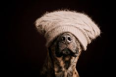 Photograph The hat of shame by Elke Vogelsang on 500px — Designspiration