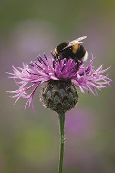 Flower Garden Attracting beneficial insects to your garden can make a real difference - find out why and how here. - Attracting beneficial insects to your garden can make a real difference - find out why and how here. Beautiful Bugs, Beautiful Flowers, I Love Bees, Bees And Wasps, Bee Friendly, Beneficial Insects, Bee Art, Bees Knees, Wild Flowers