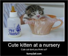 Isnt that Cute? Check more at www.funny2all.com