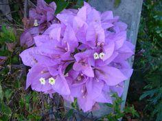Pretty Purple Flowers Maui, HI