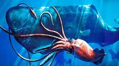 """The colossal squid truly deserves its name, growing to lengths of between 12-14m (39-46 feet) – about the size of a bus. It was first """"discovered"""" in 1925 – but only its tentacles were found, within the belly of a sperm whale."""