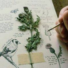 – DIY How do I make a herbarium? – DIY – – Comment faire un herbier? – DIY side herbarium with plant Kunstjournal Inspiration, Sketchbook Inspiration, Sketchbook Ideas, Sketchbook Pages, Garden Inspiration, Arte Sketchbook, Moleskine Sketchbook, Travel Sketchbook, Witch Aesthetic
