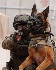 Working dogs have natural talents that are carefully honed with intensive training to perform jobs that help humans. Military Working Dogs, Military Dogs, Police Dogs, Military Personnel, Military Army, Malinois Dog, Belgian Malinois, War Dogs, American Soldiers