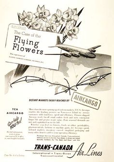 1949 Trans Canada Airlines Air Cargo original vintage advertisement. Explains the benefits of how Pacific Flowers Ltd. of Victoria, B.C. reaches new markets with TCA Air Cargo.