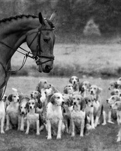 Hunt Horse and Hounds