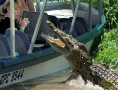 - crocodiles likes tourists as meat - TodaysFun . Worlds best funny pictures collection I Love To Laugh, Make You Smile, Funny Animal Pictures, Funny Animals, Epic Pictures, Crazy Animals, Wild Animals, Animal Attack, Dangerous Animals