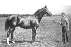 Sainfoin(1887)(Colt)Springfield- Sanda By Wenlock. Sire Of Rock Sand(Broodmare Sire Of Man O' War) And Broodmare Sire Of Phalaris(Grandsire Of Nearco) & Hurry On(Bred On The Exact Same Lines As Man O' War). Full Sister Sierra(1889)Is Dam Of Sundridge & Amphora.