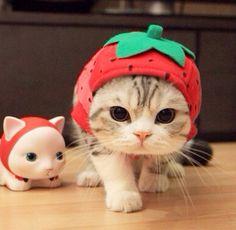 猫ネコCAT&花etc                                                                                                                                                                                 もっと見る