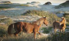 See wild horses. #VacationBIG