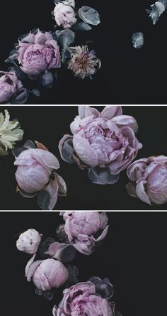 Dark Floral Photography by Kelsey Campion