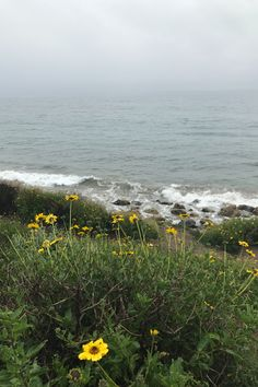 Beautiful Beaches, Cruelty Free, Body Care, Plant Based, Wellness, Ocean, California, Earth, Skin Care