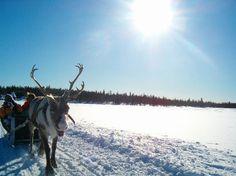 Reindeer Safari - Finland.   Activities in Saariselkä http://www.saariselka.com/individual/activities/
