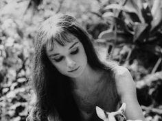 Audrey Hepburn , Fotos Citas RESUBIDO - Taringa!