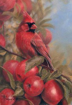 ♡ Cardinals, Cardinal Tattoos, Bird Tattoos, Bird Paintings, Pastel Paintings, Cardinal Pictures, Bird Pictures, Love Birds, Beautiful Birds