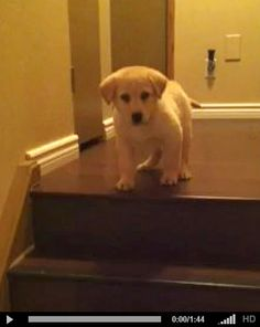 So cute I can't even express....OMG. dog teaching puppy to climb stairs