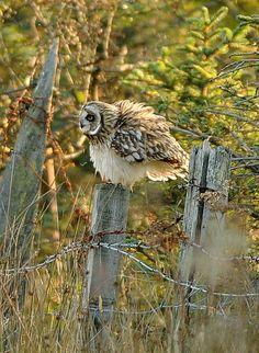 Owl:    Fluffy! (by S Hutchinson)