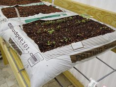 how to bag garden, SAY WHAT?!  Crazy easy, and way less expensive than using potting soil, etc