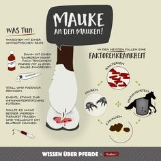 Episode Mauke - Kernkompetenz Pferd - Episode Mauke – www.kernkompetenz… You are in the right place for diy Here we present d - Beauty Tips For Women, Health And Beauty Tips, Horse Anatomy, Sock Toys, Daily Health Tips, All About Horses, Veterinary Medicine, Baby Socks, Horse Love