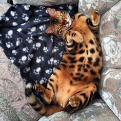 Θορ: ο γάτος-superstar του internet