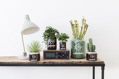 Oh baby, dus jij hebt planten…