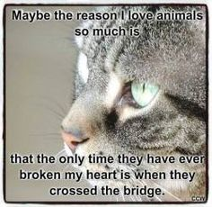 Maybe the reason I love animals so much is that the only time they have ever broken my heart is when they crossed the bridge. Crazy Cat Lady, Crazy Cats, I Love Cats, Cute Cats, Animals Beautiful, Cute Animals, Beautiful Cats, Pet Loss Quotes, Pet Loss Grief