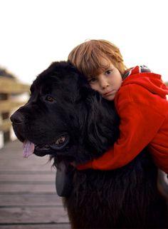 Best Dog Breeds For Children   10awesome.com
