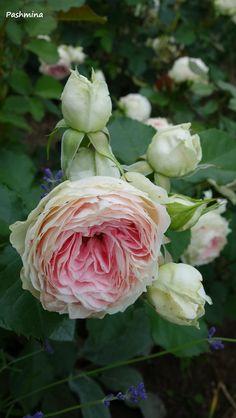 Pashmina rose. I love it!