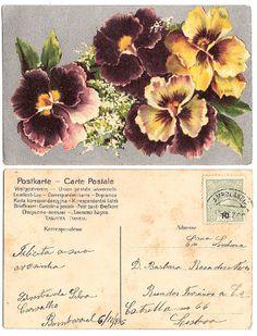 Vintage pansy postcard - both sides