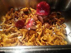 Parasta Suomessa- sienet.