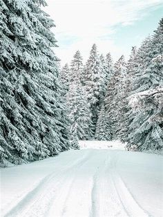 Scandinavian Snow Landscape Pictures Canvas Painting Nordic Wall Art Moden Winter Scenery Deer Decor Posters for Dormitory Decor - 50x70cm no frame / C