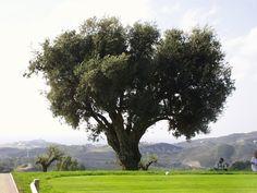 Marbella - Los Arqueros Golf
