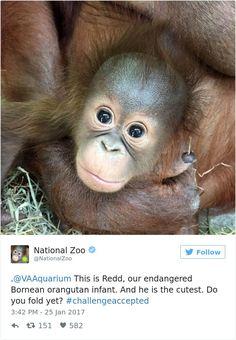 Aux États-Unis, les zoos se défient sur Twitter pour poster les clichés d'animaux les plus mignons... Verdict : ils sont tous adorables !