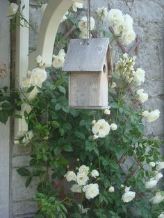 Cage et roses blanches